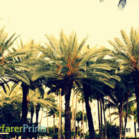 SoBe Palm Trees - South Beach Photography South Florida cool effects art photo print miami sunny tropical landscape