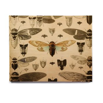 "Suzanne Carter ""Vintage Cicada"" Bugs Pattern Birchwood Wall Art"