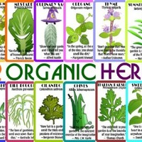 100% CERTIFIED ORGANIC NON-GMO Culinary Herb Set - 12 popular Easy-to-Grow Herb Seeds by Zziggysgal