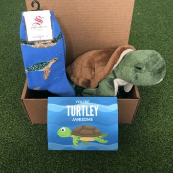 Sea Turtle Package