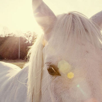 "horse photography fine art horse photograph farm decor white decor sunflare yellow horse portrait babiekins magazine ""A Horse's Eyes"" 8x12"