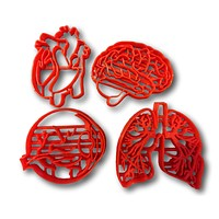 Human Tissue Anatomy Cookie Cutter (Set of 4)