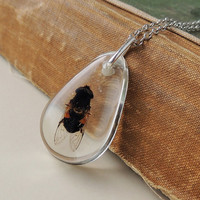 Dead Bee Necklace, Real Insect in a Resin Pendant, Resin Jewelry, Insect Jewelry, Beekeeping, Spooky, Halloween, Goth, Recycled Upcycled