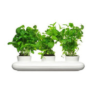 Flavor Trio Herb Planter