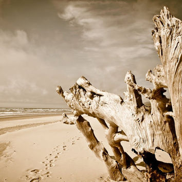 Oregon Coast Beach Wood Tree Trunk North View 11x16 print