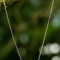 Fly Away Home Necklace-Gold