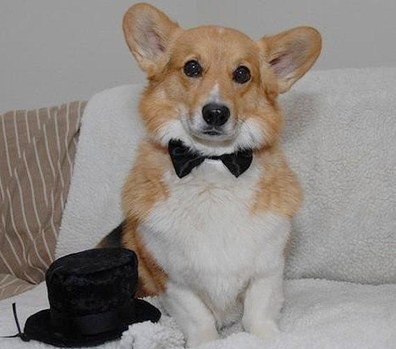 Dog Formal Wear Bow Ties for your dog for that by miascloset
