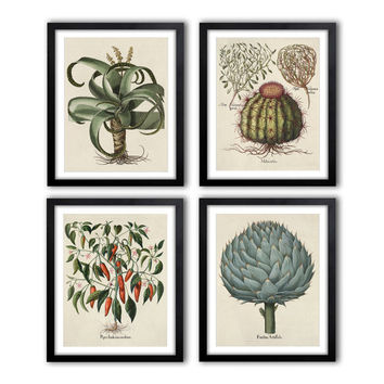 Set of 4. Antique Botanical Illustrations 1640-1900 poster set, Botanical Vintage Art, pictures drawings set, green room decor *20.03*
