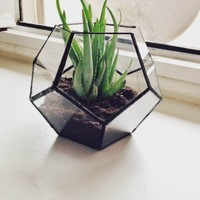 Stained Glass Dodecahedron Terrarium