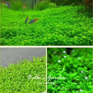 Hot Selling 300pcs/lot Aquarium Grass Seeds Water Aquatic Plant Seeds Mini Double Leaves Water Plants Home Garden Free Shipping