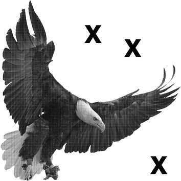 Bald eagle with open wigns in mid flight - Airbrush stencil