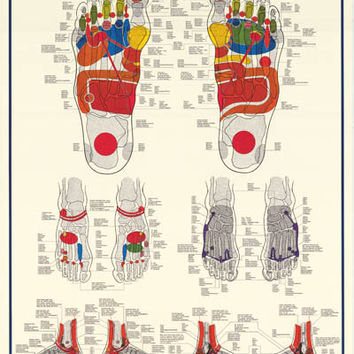 Reflexology Foot Massage Anatomy Poster 27x39