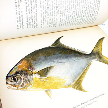 Antique Fish Book, Fish Lithograph, American Food and Game Fishes, Julius Bien, Fish Illustrations, Fish Ephemera, Rare Book, Fathers Day