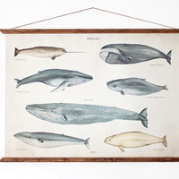 LARGE A1 Whales Canvas poster a1 - vintage illustration educational chart illustration WAP2001