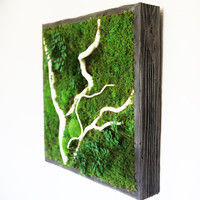 """18""""x18"""" Plant Painting- No Care Green Wall Art. Real Preserved Plants. Moss Art with branches."""