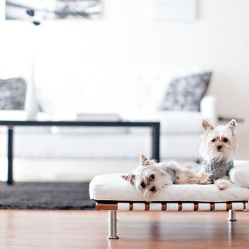 $155.00 Modern Pet Bed daybed and lounger Small Dog Bed / Cat by ModPet