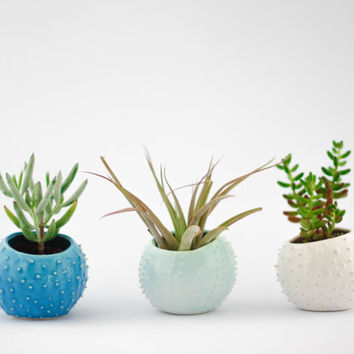 Set of 3 small handmade ceramic succulent planters/ air planters/ turquoise/ white/ mint/ flower pot/ indoor garden/ planter cover
