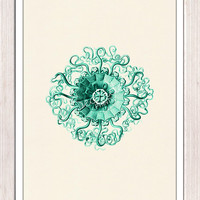 Wall decor poster-Jelly fish Peromedusae in sea foam green- sea life print- free shipping