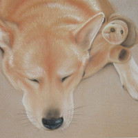 Custom Pet Portrait In Pastels 11 x 14