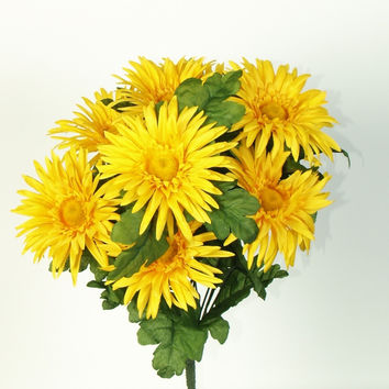 Gerbera Daisy Bush - Yellow  BLOW OUT SALE !!