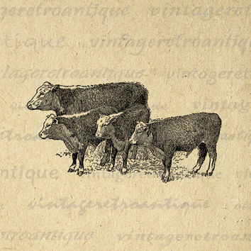 Printable Image Cows Antique Graphic Farm Animal Digital Download Vintage Clip Art for Transfers Making Prints etc HQ 300dpi No.3588