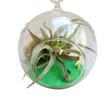 Green Circle Table Terrarium