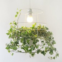 Photosynthesis Lamp - $325