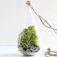 Geode and Pyrite Air Plant Teardrop Terrarium Kit