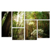 Muir Woods Wall Art Set of 6