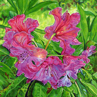 """Giclee print on canvas - Pink Rhodo - 8"""" x 10""""  - Signed/Editioned"""