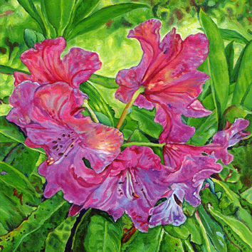 "Giclee print on canvas - Pink Rhodo - 8"" x 10""  - Signed/Editioned"