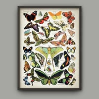 Antique Butterfly Illustration Wall Art Poster - Antique French Butterfly Book Plate Wall Art - Butterfly Picture Home Decor (AB376)