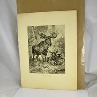 Moose or Elk Wood Engraved Print  1880s Animate Creation Antique Victorian Era - Ready to Mat and Frame