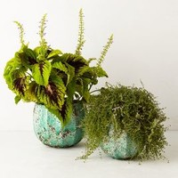 Celadon Garden Pot by Anthropologie