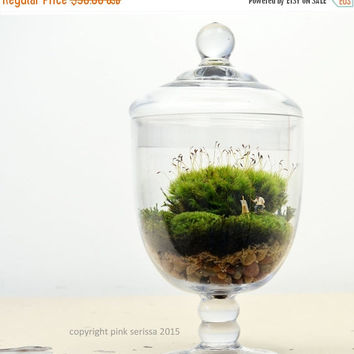 On Sale Live Moss Terrarium // Landscape Painter// DIY kit // Glass Apothecary Jar // Home Decor // Green Gift