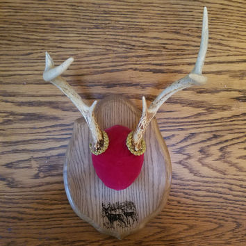 Six Point Antler Mount on Plaque