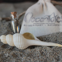 Spindle Baby Seashell Smoking Pipe Chillum