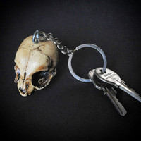 KEYCHAIN - ODDITY Gift Idea  - Kitten Skull replica Keychain with hand made certificate