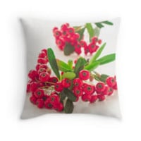 Pyracantha Firethorn orange berries with green leaves, isolated on white by yumehana