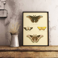Butterflies Antique Print| Butterfly Art| Vintage Butterfly Print| Butterfly Wall Art| Natural Art| Entomology| Insects Wall Art| HAP033