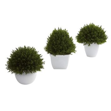 Mixed Cedar Topiary Collection (Set of 3)