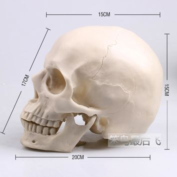 white 1: 1 human skull model life size resin skull model art teaching human skeleton model free shipping