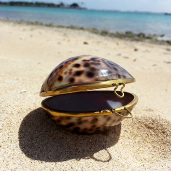 Brown Tan Spotted Seashell Jewelry Box Case