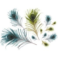Peacock Feathers Wall Decal