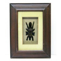 African Art Carving of a Small Mask, in a shadow-box style wood frame.