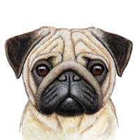 Pug Canvas Print by Nika Akin