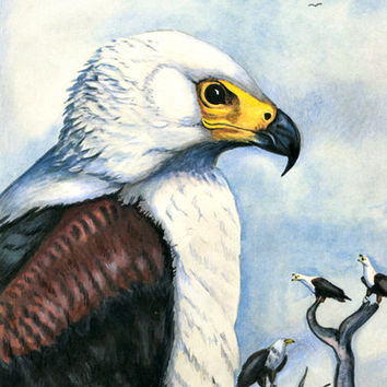african eagles original animal art drawing colored pencil bird wildlife nature artwork