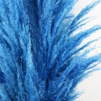 "Dried Pampas Grass in Blue - 5-6 Stems per Bunch - 30""-42"" Tall"