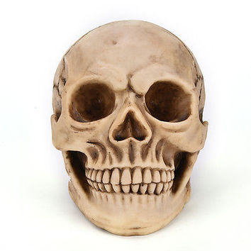 Retro arts Human Skull Replica Resin Model Medical Lifesize Realistic 1:1 HU
