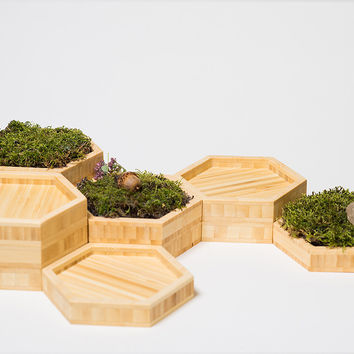 Hexagonal  Planter Puzzle